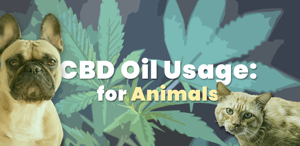cbd oil for animals