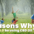 why you should be using cbd oil